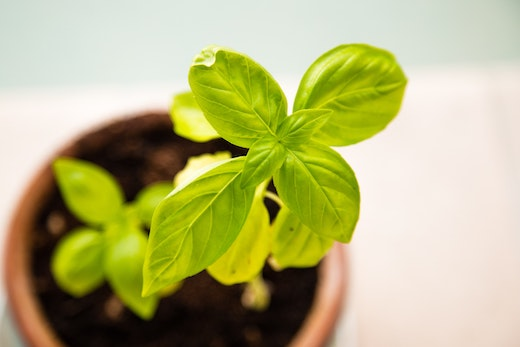 Green growing plant in a pot